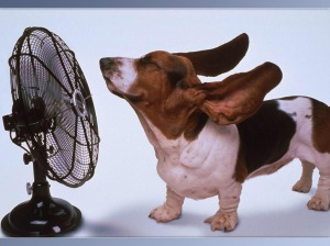 dog-with-fan
