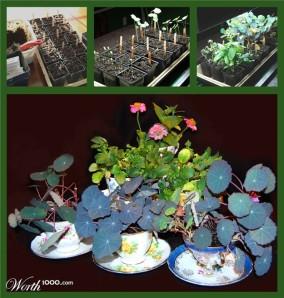 teacup-garden