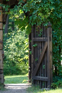 Opened wooden gate decorated with green climbing plant..